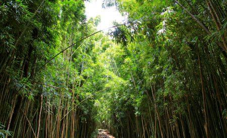 Les sentiers d'Hawaï les plus indiqués pour les enfants