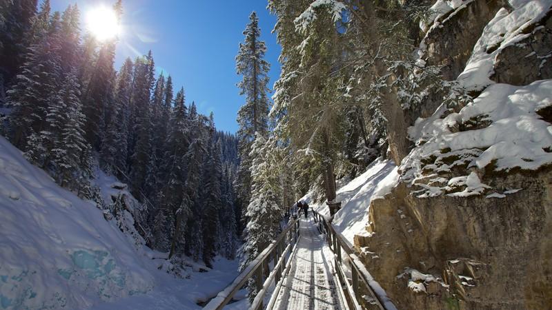 Parc national de Banff en Alberta Bibliothèque d'images Viewfinder d'Expedia.com Image utilisée avec l'autorisation de Tourism Media