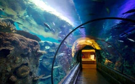 Top 10 Water Attractions in Las Vegas