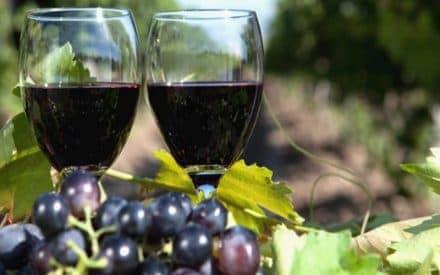 The Best Okanagan Valley Wine Tours