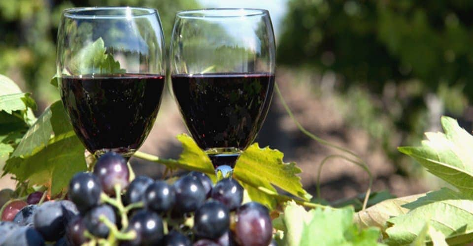 Best Niagara Wine Tasting Tours