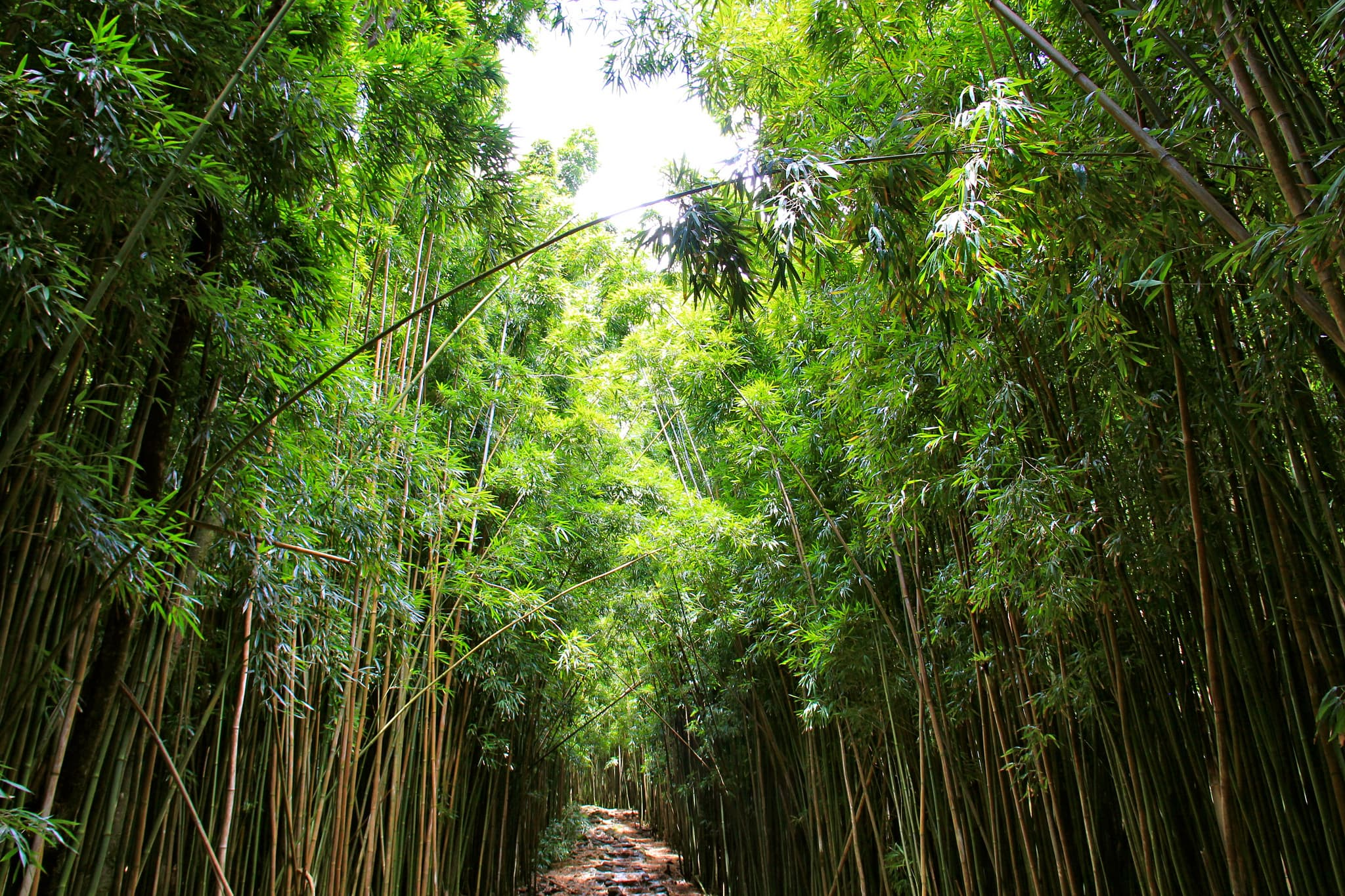 The Top Kid-Friendly Trails in Hawaii