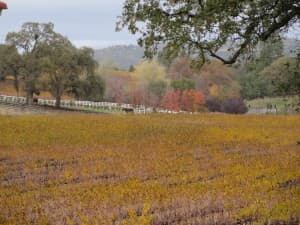 Ironstone Vineyards is a lovely and very popular spot in the foothills of the Sierra Nevada mountains, a couple hours east of San Francisco.
