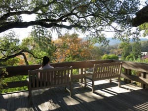 Matanzas Creek is a wonderful winery in Sonoma County.