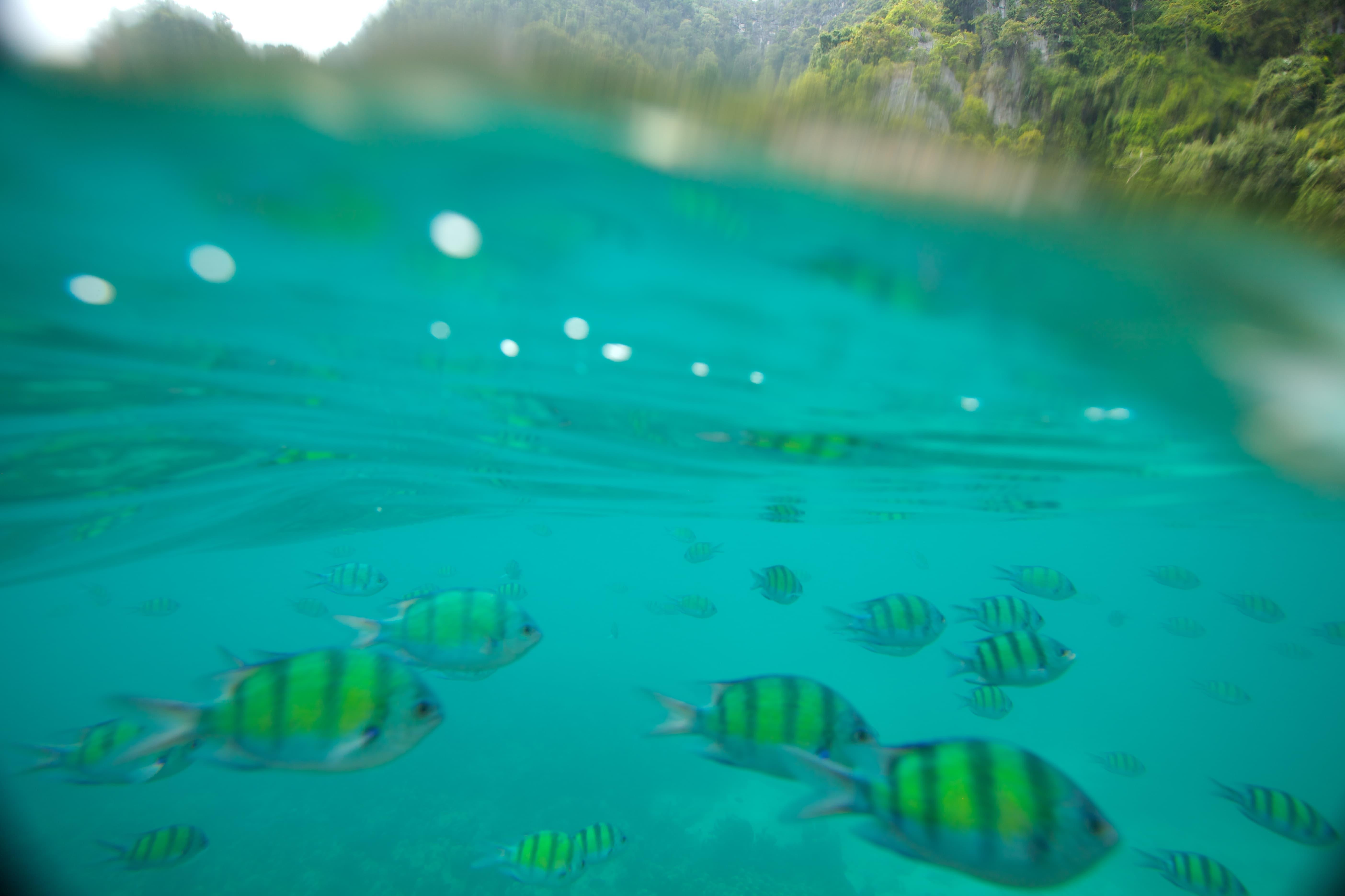 Snorkel-thailand