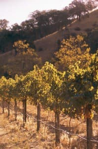 You'll find many excellent wineries, and beautiful, rolling hills, in the Livermore Valley/Pleasanton wine-growing area east of San Francisco.