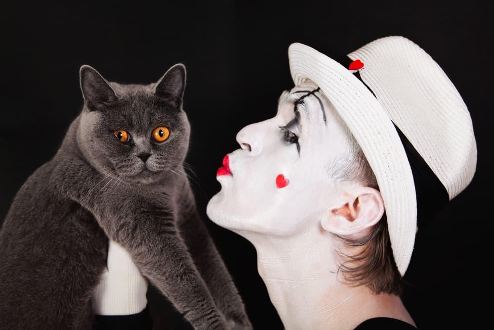 Week37_2_Mime kissing gray cat