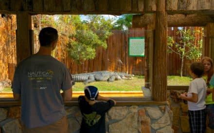 Spring Attraction Hits in Kissimmee Florida