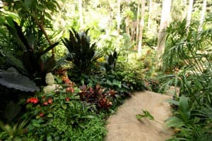 Hunte's Gardens is a magical slice of Barbados.