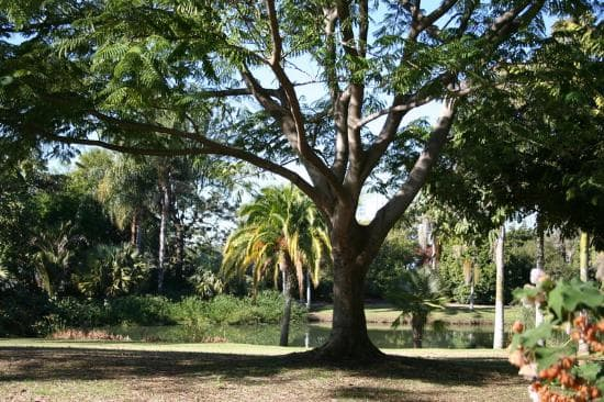 fullerton-arboretum-botanic
