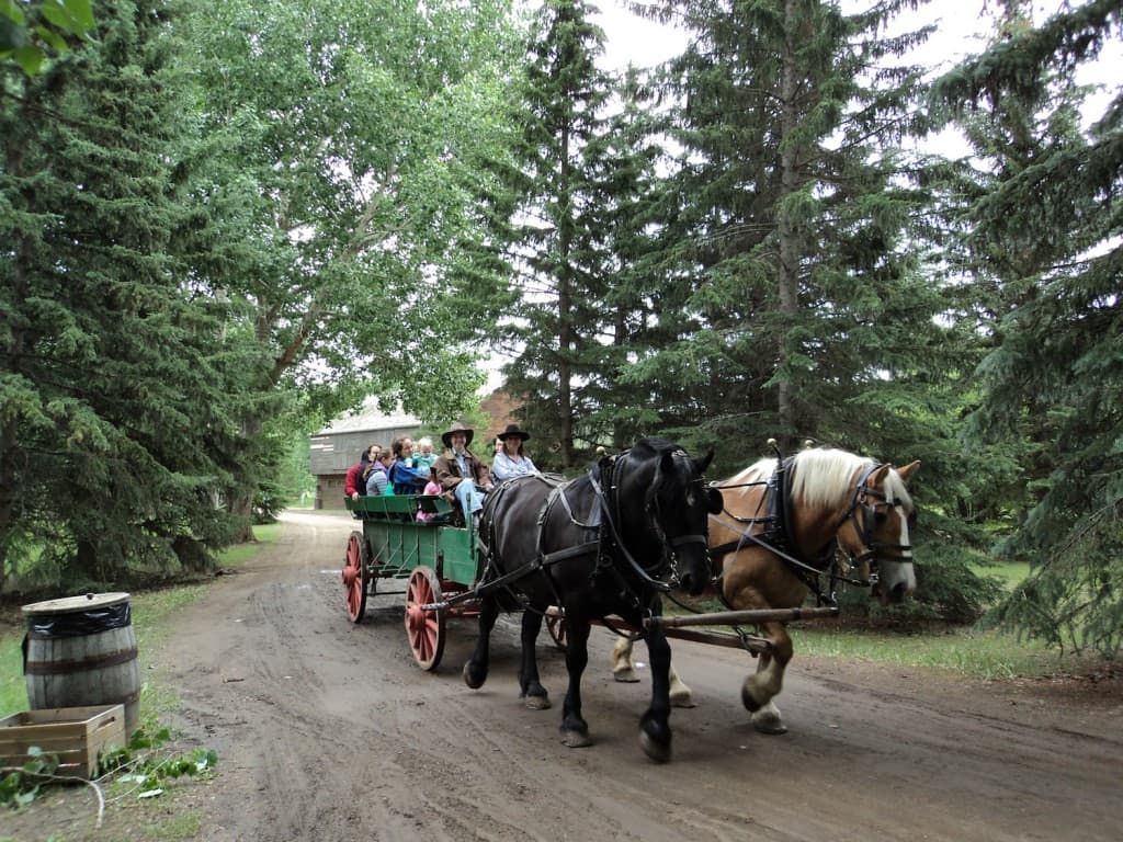 Horse Drawn Wagon 2