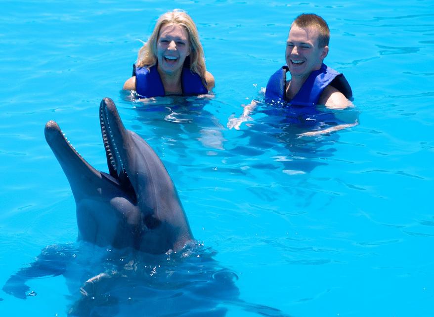 Los Cabos Dolphins