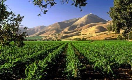 6 Great California Wine Regions Not Named Napa