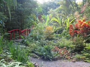 You'll find luscious tropical flowers of all kinds at the Diamond Falls Botanical Gardens near Soufriere.