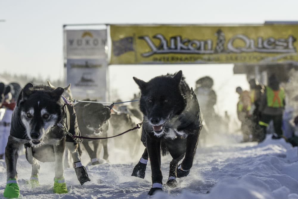 Image courtesy of Yukon Quest
