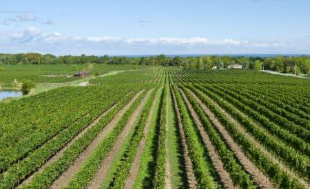 Must-Visit Wineries in Ontario