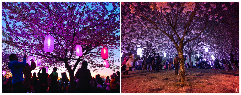 Vancouver Illumination