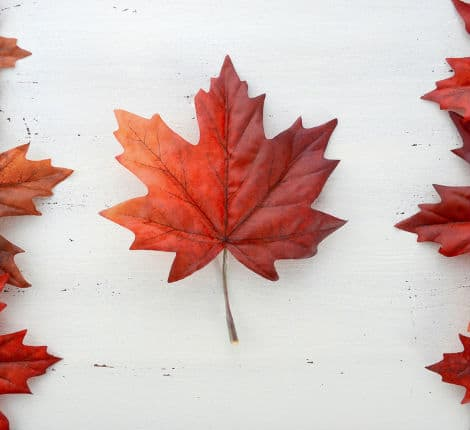 canada maple leaf thumbnail