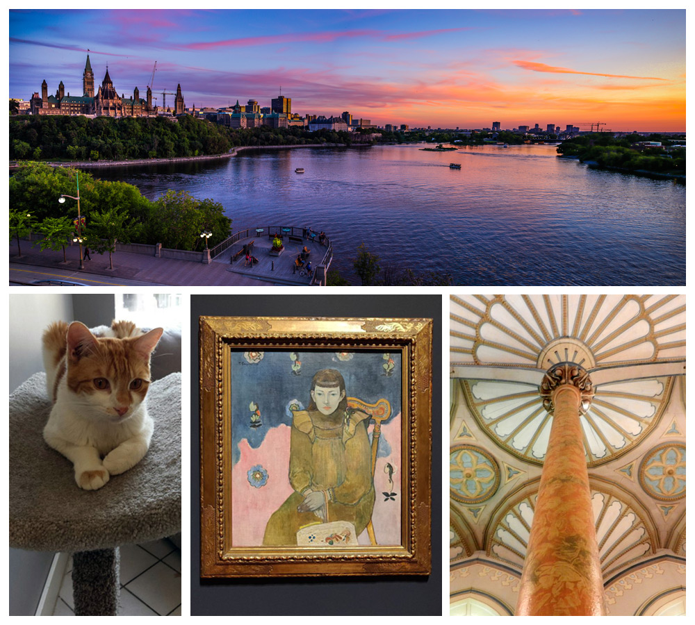 Art and cat cafes, which make Ottawa one of the coziest places in Canada