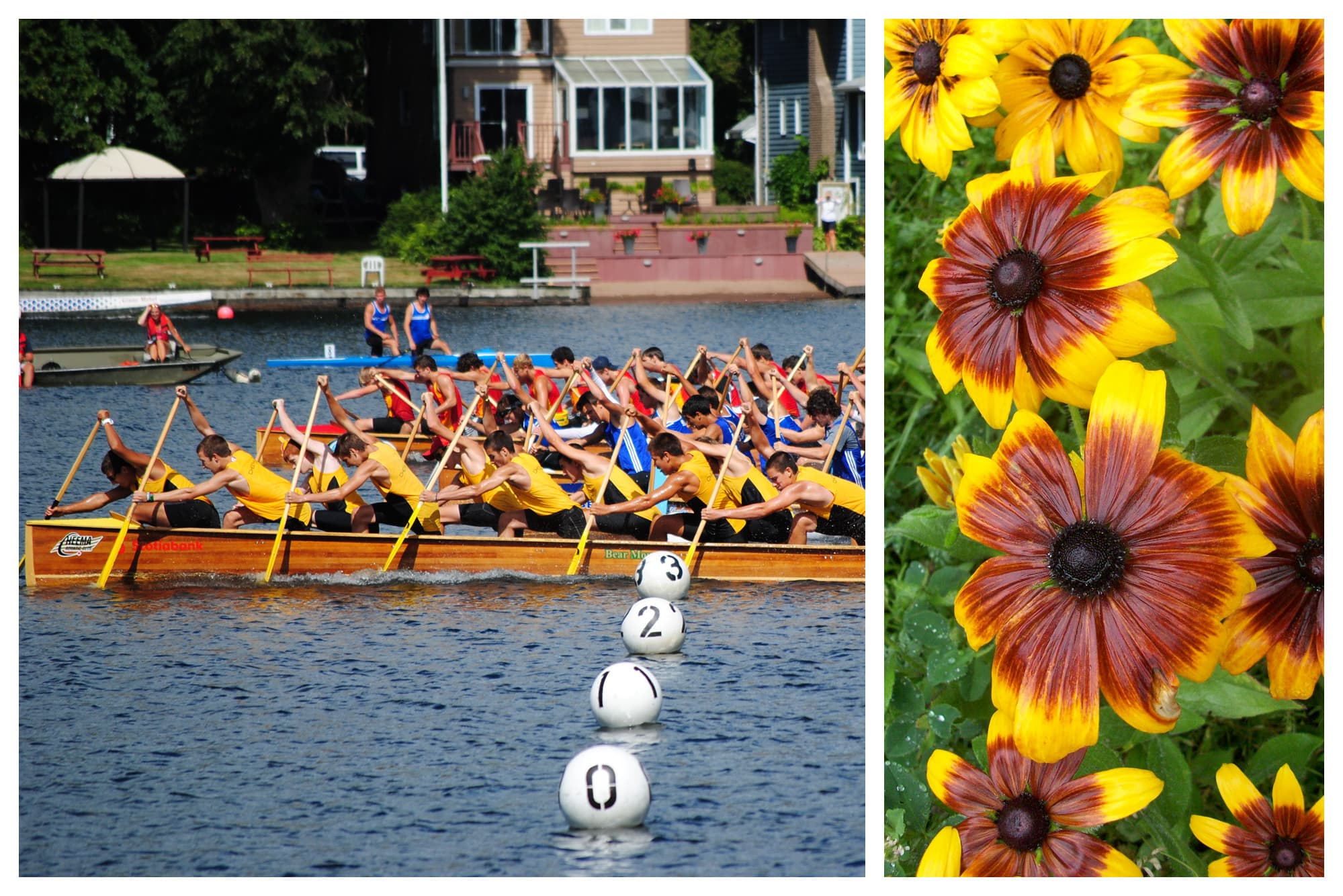 Rowers rowing and flowers blooming in Dartmouth, Nova Scotia