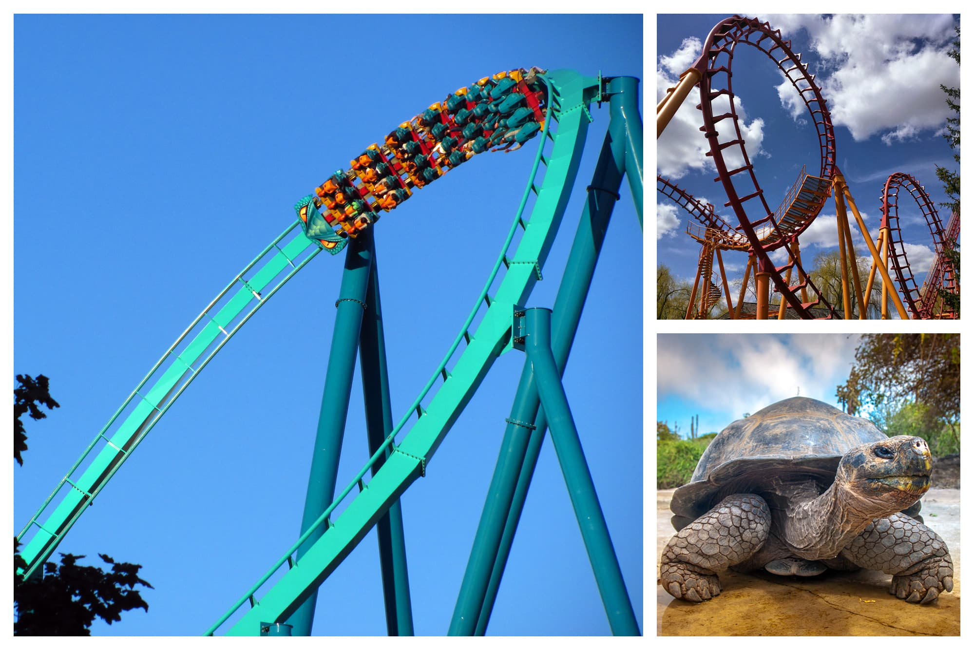 Roller coasters and a giant tortoise in Vaughan, Ontario