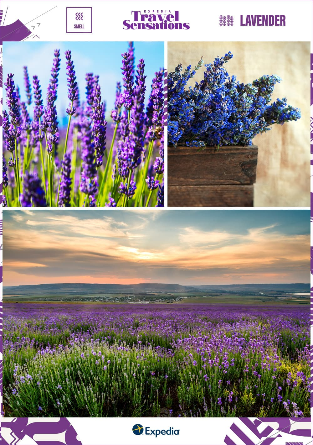 lavender bundles and fields