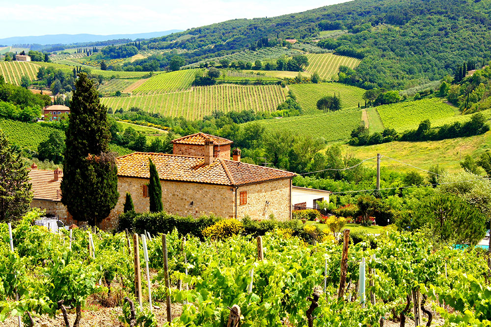 Green, rolling vineyards in Tuscany, Italy, one of the best places to travel to in 2019