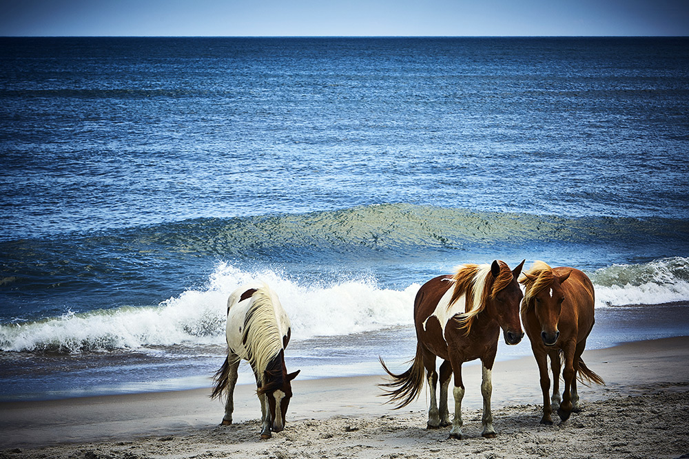assateague island best beaches