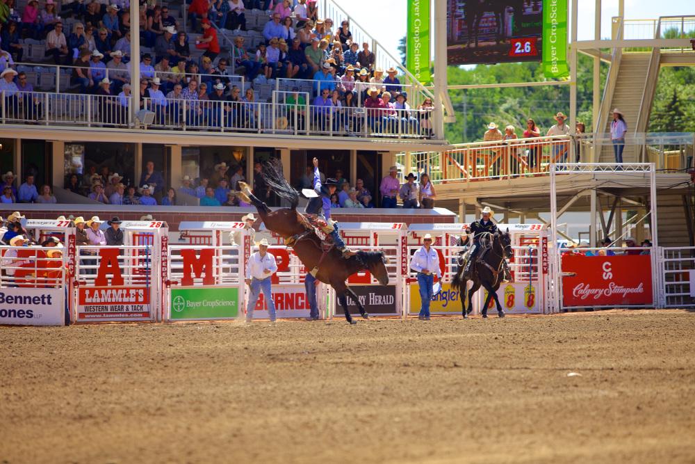calgary rodeo