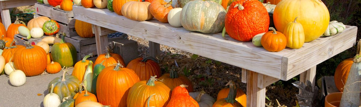 featured image local farms