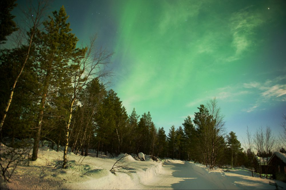 A wintry view of northern lights above pine trees