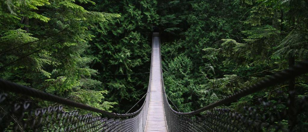 Forest bathing at Capilano Suspension Bridge, Vancouver, Canada