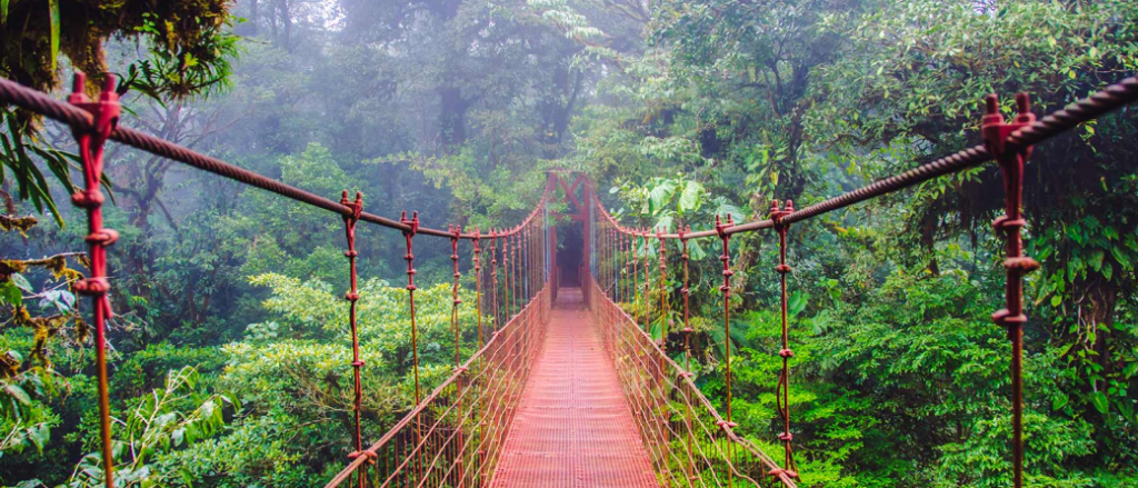Forest bathing in Monteverde Cloud Forest in Costa Rica