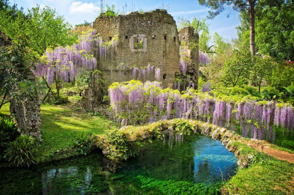 Blooming wisteria at The Nymph Garden - Ninfa Latina Italy